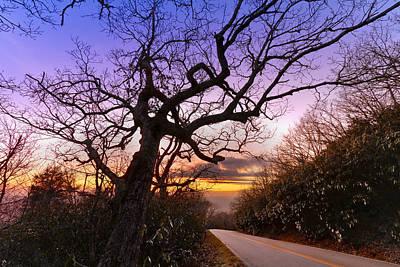 Evening Tree Art Print