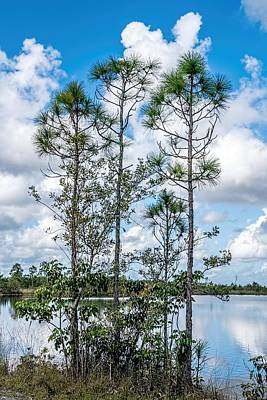 Photograph - Everglades 0336 by Rudy Umans
