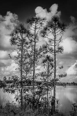 Photograph - Everglades 0336bw by Rudy Umans
