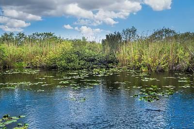 Everglades 0817 Art Print by Rudy Umans