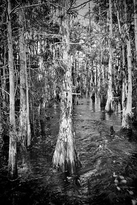 Photograph - Everglades 5200bw by Rudy Umans