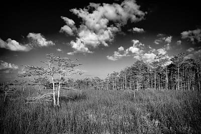 Sloughs Photograph - Everglades 9574bw by Rudy Umans