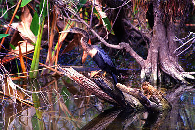 Photograph - Everglades Camoflage by Martin Sullivan