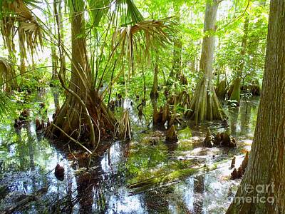Florida Swamp Photograph - Everglades by Carey Chen