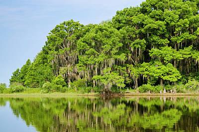 Southern States Photograph - Everglades Florida by Michael Defreitas