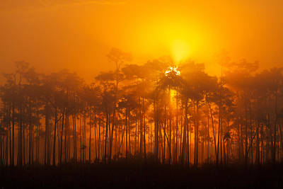 Everglades Foggy Sunrise Art Print