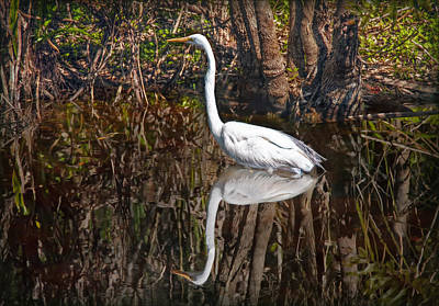 Photograph - Everglades by Hanny Heim