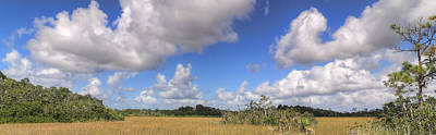Wine Corks Royalty Free Images - Everglades Landscape Panorama Royalty-Free Image by Rudy Umans