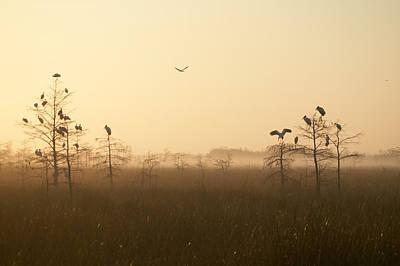 Photograph - Everglades National Park by Byron Jorjorian