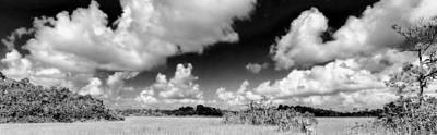 Everglades Panorama Print by Rudy Umans