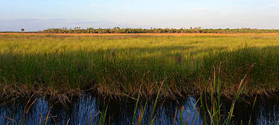 Photograph - Everglades Panoramic C by David Lee Thompson
