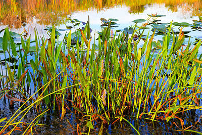 Photograph - Everglades Reflection by David Lee Thompson