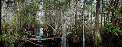 Cypress Swamp Photograph - Everglades Swamp-1 by Rudy Umans