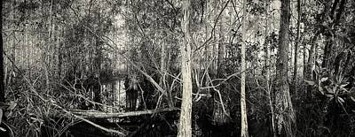 Cypress Swamp Photograph - Everglades Swamp-1bw by Rudy Umans