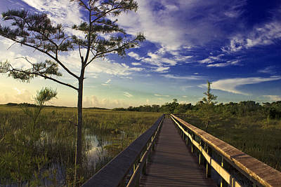 Photograph - Everglades  by Swank Photography