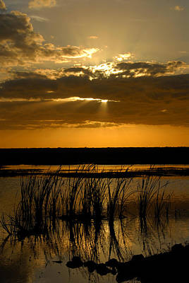 Photograph - Everglades Vertical A by David Lee Thompson