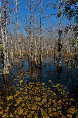 Photograph - Everglades0368 by Matthew Pace