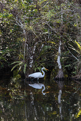 Photograph - Everglades0384 by Matthew Pace