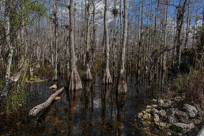 Photograph - Everglades0393 by Matthew Pace