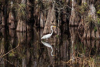 Photograph - Everglades0419 by Matthew Pace