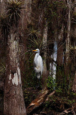 Photograph - Everglades0422 by Matthew Pace