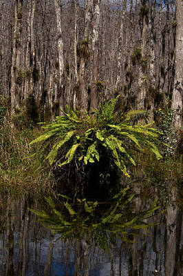 Photograph - Everglades0427 by Matthew Pace