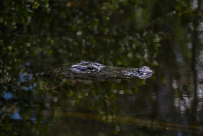 Photograph - Everglades0434 by Matthew Pace