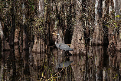 Photograph - Everglades04414 by Matthew Pace