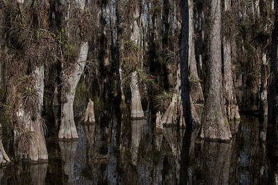 Photograph - Everglades0450 by Matthew Pace