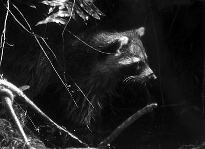 Photograph - Everglades Raccoon by David Lee Thompson