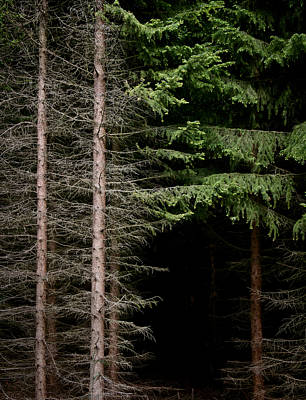 Evergreen And Brown Art Print by Odd Jeppesen