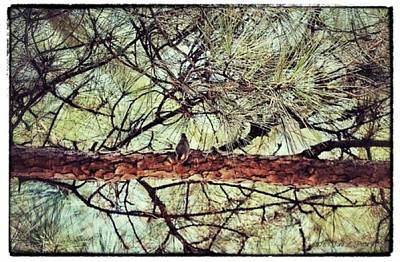 Art Print featuring the photograph Evergreen Bird by Tara Potts