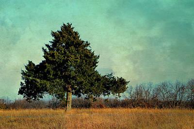 Photograph - Evergreen by Deena Stoddard