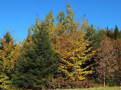 Photograph - Evergreen Fall by Gene Cyr