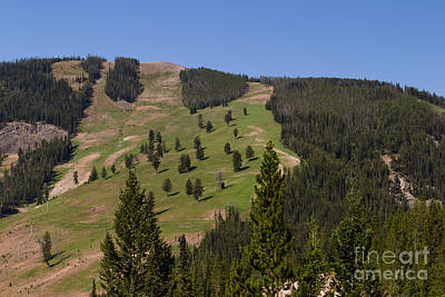 Photograph - Evergreen Hillside by Charles Kozierok