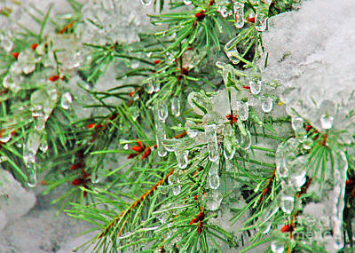 Evergreen Icicles II Art Print