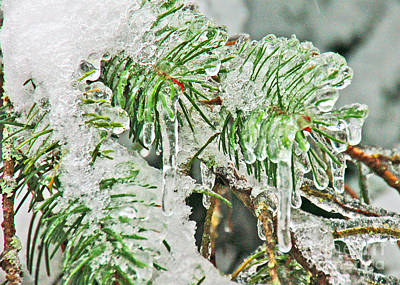 Photograph - Evergreen Icicles IIi by Chuck Flewelling