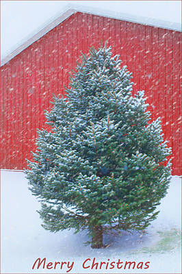Photograph - Evergreen In Winter 2 by Nikolyn McDonald