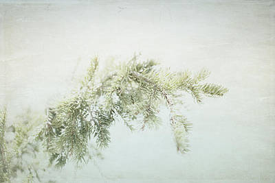 Photograph - Evergreen by Lisa Parrish