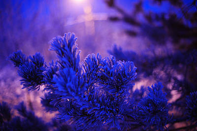 Photograph - Evergreen Tree In Twilight by Jenny Rainbow