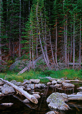 Photograph - Evergreen Trees Rocky Mountain National Park by Posters of Colorado