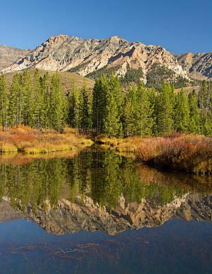 Boulder Mountain Photograph - Evergreens, Boulder Mountains by Michel Hersen