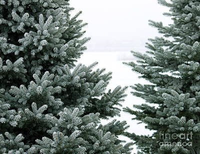 Evergreens Art Print by Debbie Hart