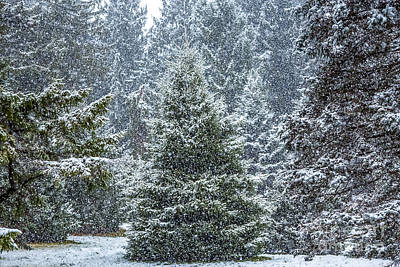 Photograph - Evergreens In A Snowstorm 2 by Susan Cole Kelly