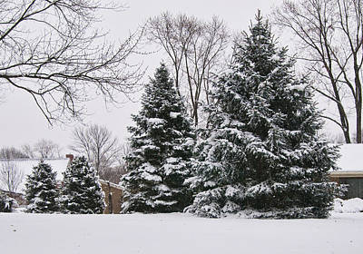 Evergreens In The Snow Print by Phyllis Taylor