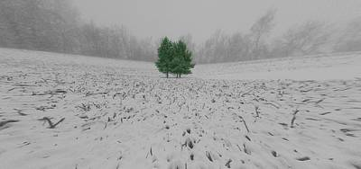 Photograph - Evergreens In The Winter by Dan Sproul