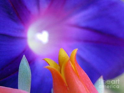 Photograph - Every Heart Has A Halo Photography by Tina Marie