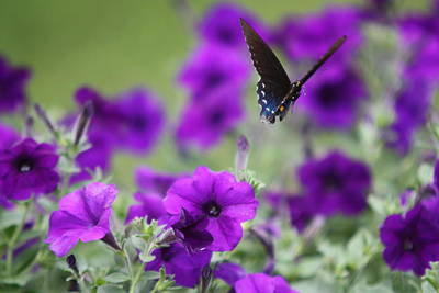Photograph - Everything Is Purple  by  Kathy Cornett