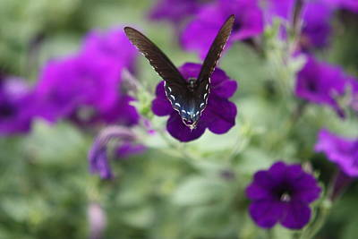 Photograph - Everything Is Purple 6 by Kathy Cornett