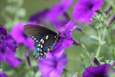 Photograph - Everything Is Purple 7 by  Kathy Cornett
